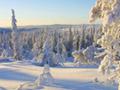雪を被った森