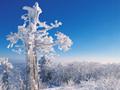 青空にきらめく樹氷