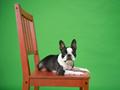 いすの上で一休み