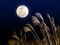 満月と銀色のススキ