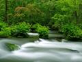 森を流れる渓流