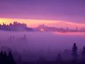 霧に包まれた森