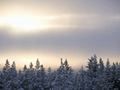 冬の森の夕暮れ