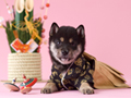 柴犬と門松