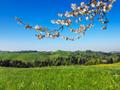 桜の枝と丘からの眺め
