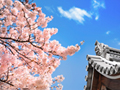 桜と屋根瓦