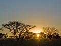 バオバブの木(南アフリカ)
