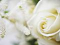 白バラと白い花