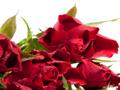 束ねた赤バラ