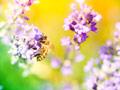 紫の花と蜂