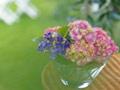 ガラス鉢と紫陽花