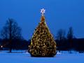 公園のクリスマスツリー