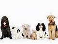 犬と猫のポートレート