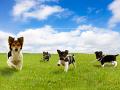 草原を駆ける子犬たち
