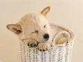 白いバスケットでおやすみ