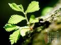 若葉の成長(4月カレンダー)