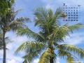 ヤシ(7月カレンダー)