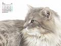 毛並みの良い猫(3月カレンダー)