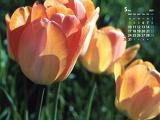 日差しを浴びる花(5月カレンダー)